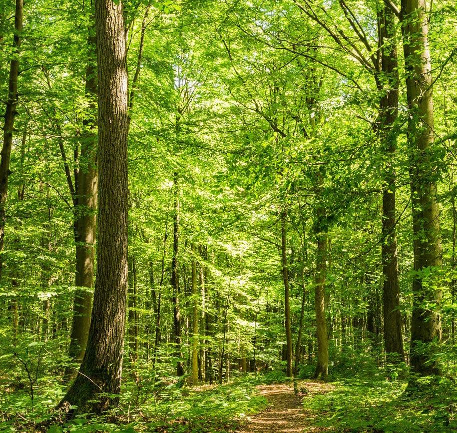 Wald Pfad Bume Sommerzeit