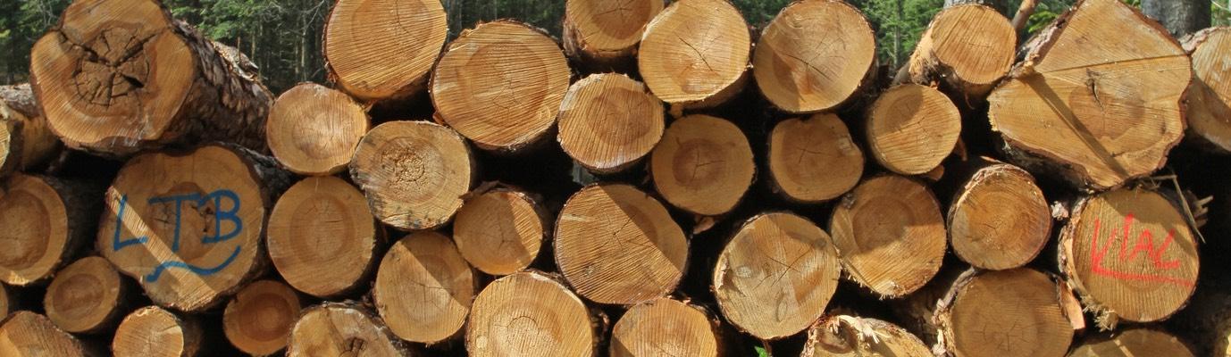 exploitation forestire