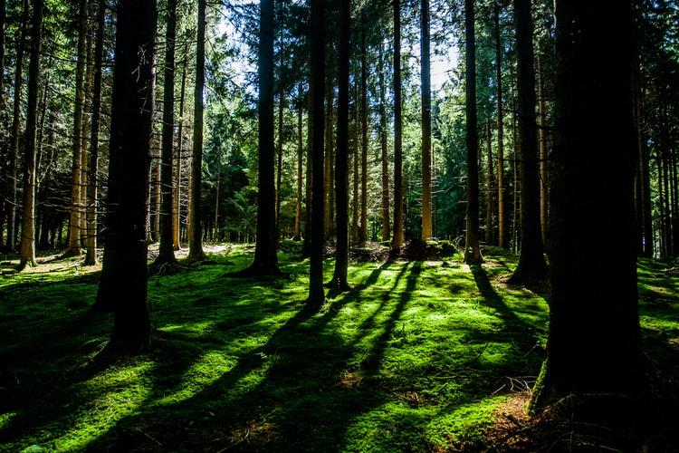 GFI France Valley Forêts, un actif décorrélé des marchés financiers