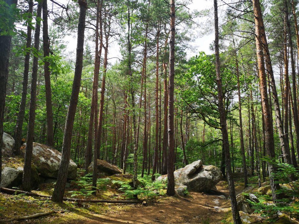 Forêt de Fontainebleau 2020