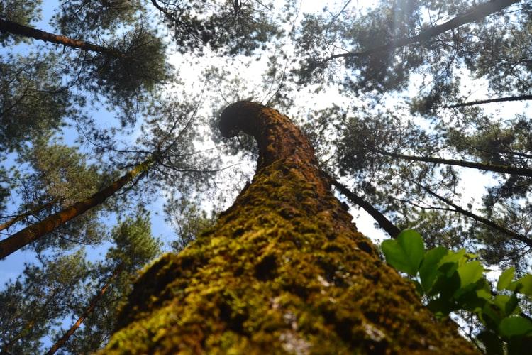 La forêt d'Iraty dans les Pyrénées-Atlantiques