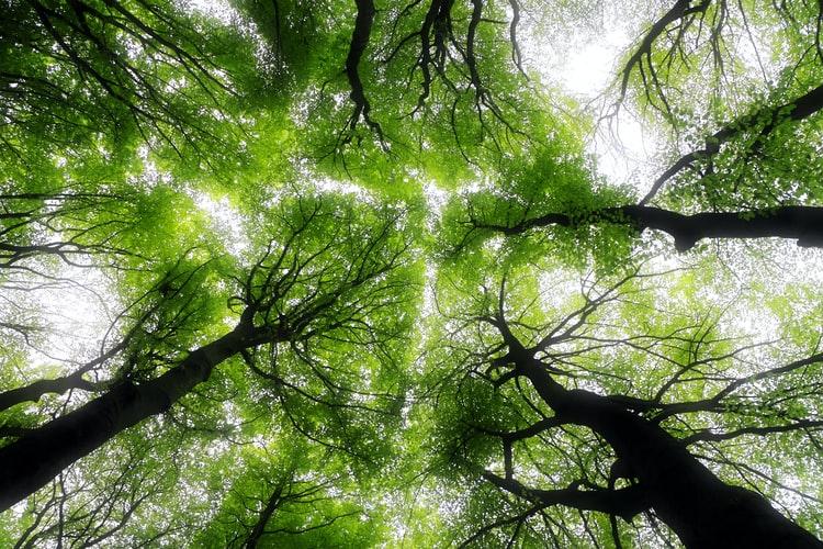 La forêt domaniale de Grande Chartreuse dans l'Isère (Savoie)