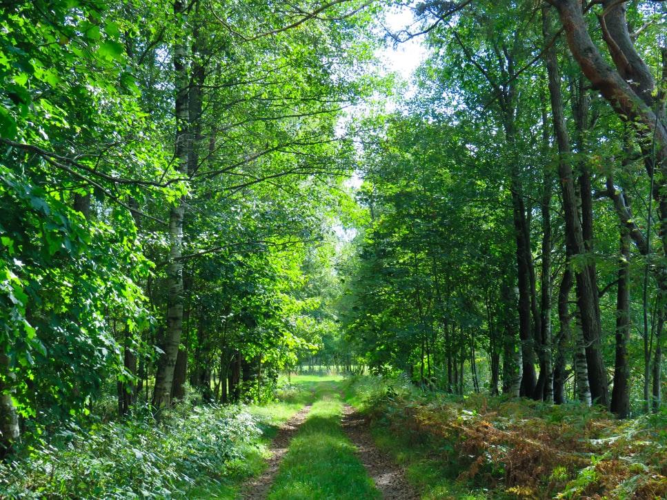 Groupement forestier dédié