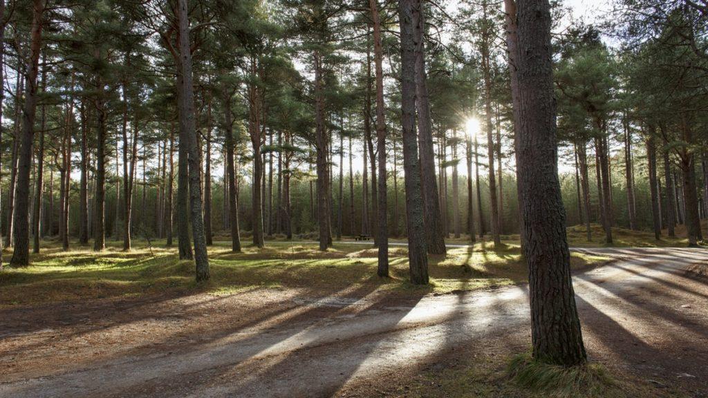 Le GFI France Valley Patrimoine acquiert le Bois du Ballu en Normandie