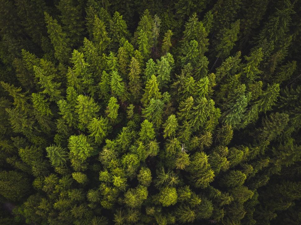 Une révolution dans l'inventaire forestier