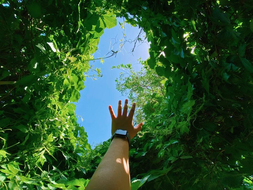 Reforestation : les initiatives des entreprises françaises