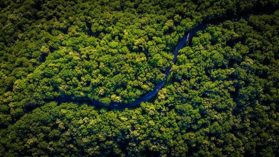 Nuit des forêts : un événement nature au rythme de la forêt française !