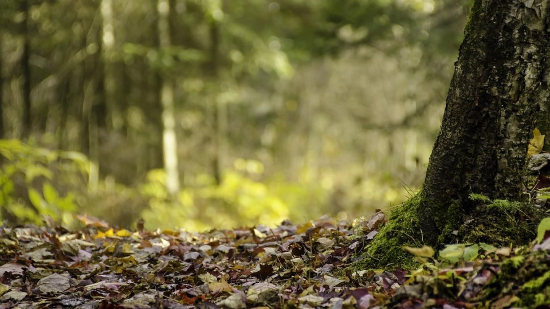 sortir d'un groupement forestier