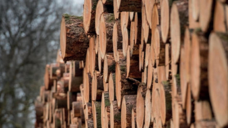 filiere-bois-transition-ecologique