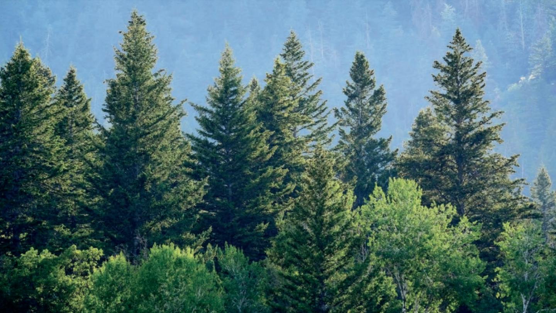 10-engagements-filiere-bois-neutralite-carbone