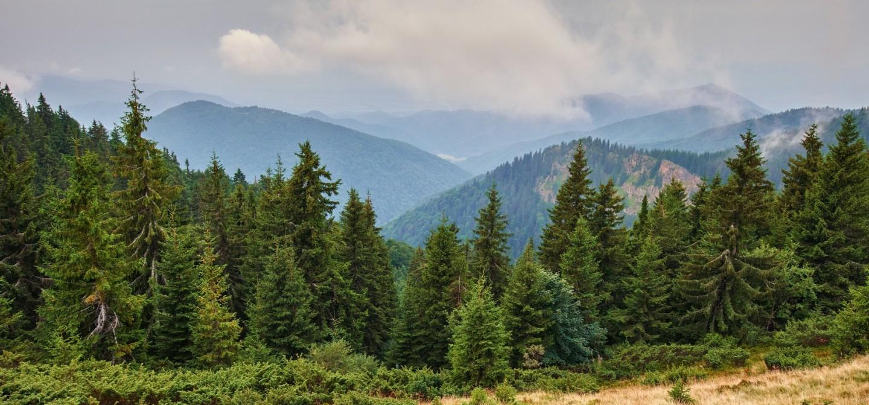 QUELLE PLACE POUR LES GROUPEMENTS FORESTIERS AU SEIN D'UN PATRIMOINE ÉQUILIBRÉ ?