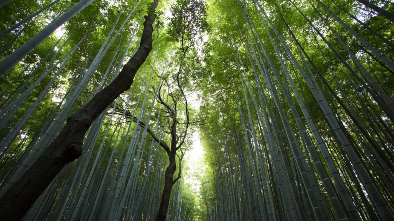 groupement foncier forestier_pourquoi investir