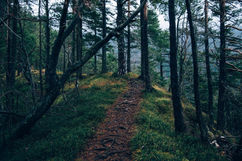frais d'un groupement forestier