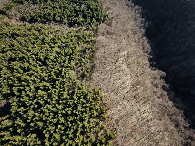 03-08-2020_ethiopie-plante-350-millions-arbres