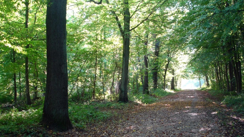 Investissement en forêt