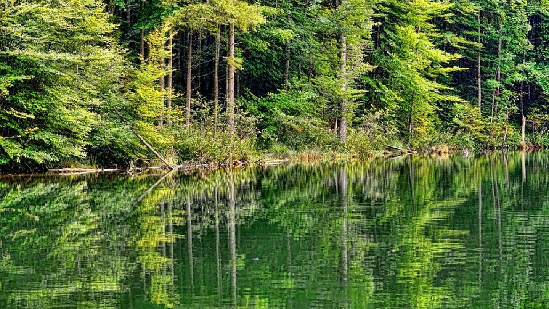 fiscalité groupement forestier