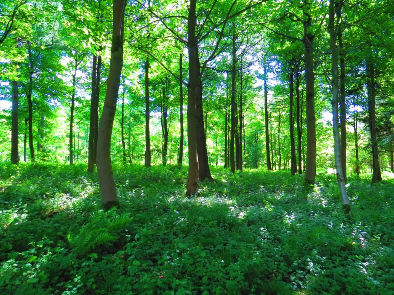 groupement-forestier-bon-investissement-2021