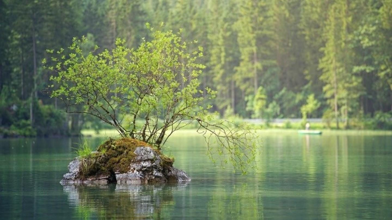 Comment fonctionne un groupement forestier ?