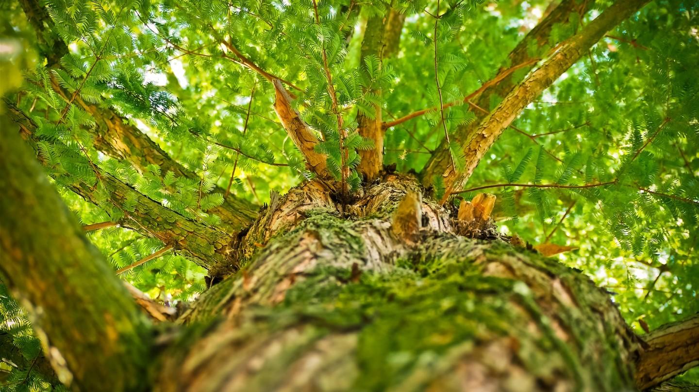 creer un groupement forestier