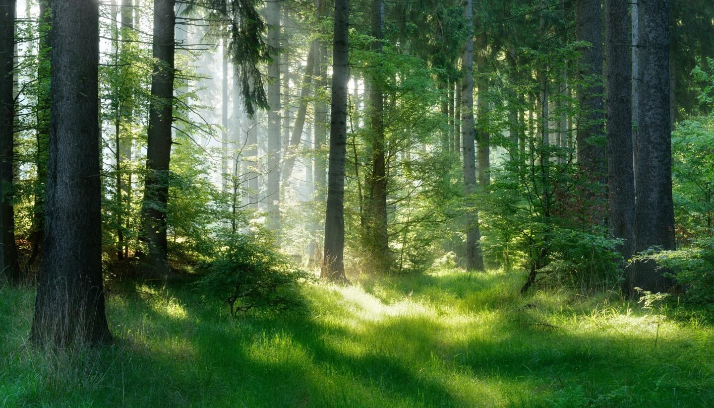 groupement-forestier-avantages-fiscaux